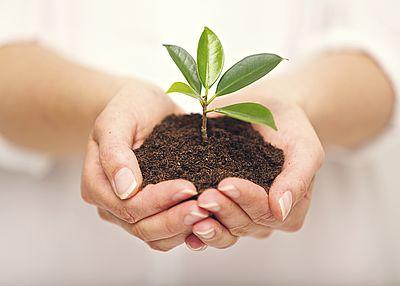 Das Bild zeigt zwei Hände die etwas Erde mit einer Pflanze darin tragen.